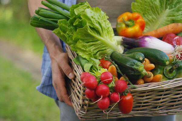 Melhores vegetais para cultivar em um jardim de outono
